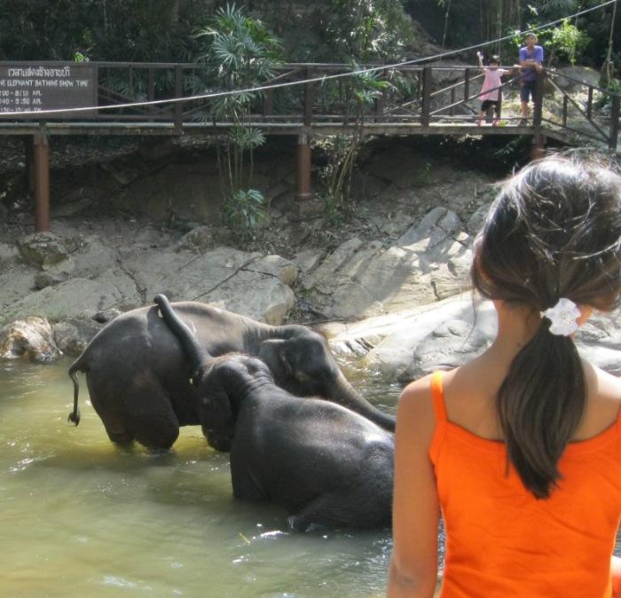 elephants bathing, elephants playing, watching elephants