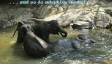 adoption, pregnancy, elephants